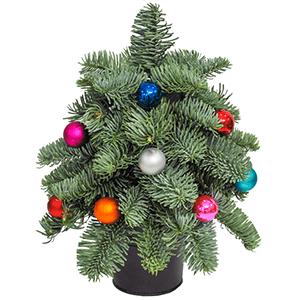 Букет на Новый Год - Маленькая елочка