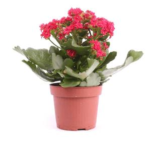 Воронеж комнатные цветы с доставкой доставка цветов москва магазин