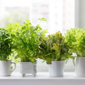 ТОП-8 лекарственных растений для вашего дома
